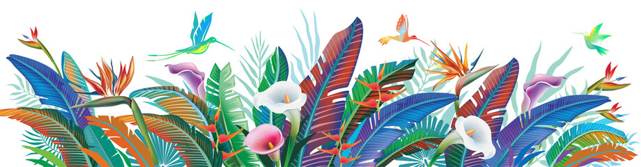 Tropical jungle plants, flower and hummingbirds, vector illustration