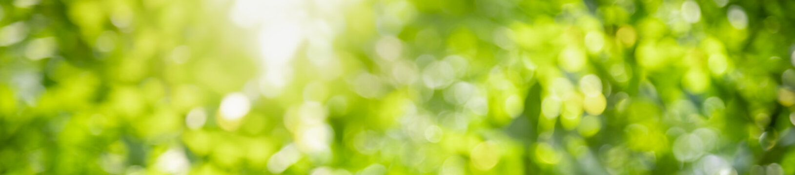 Abstract blurred out of focus and blurred green leaf background under sunlight with bokeh and copy space using as background natural plants landscape, ecology cover concept.