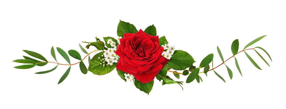 Red rose flower and green leaves in a floral arrangement
