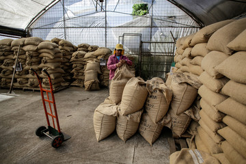 A worker packs coffee bags for export at a coffee plantation, in Grecia