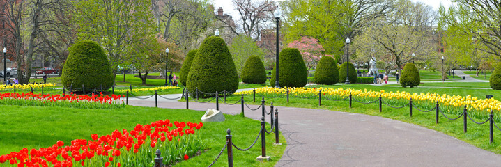Panoramic view of Boston Public Garden grounds in early spring. Red and yellow tulips. Colorful tree flowers, elegant design.