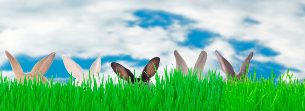 rabbits in green grass on blue sky background