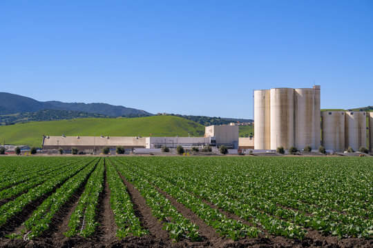 Farm Field in California with blue sky