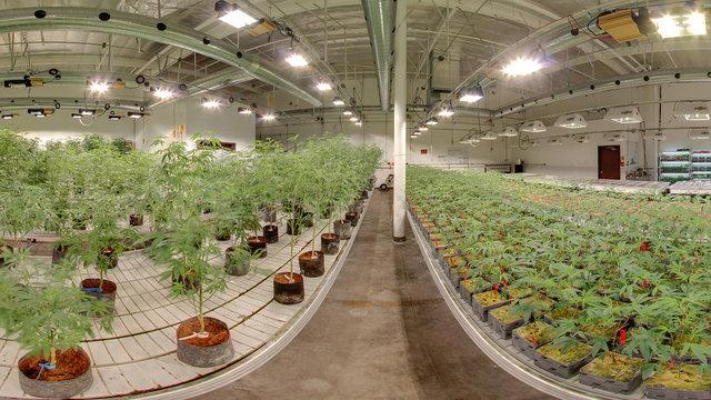 Indoor Grow House