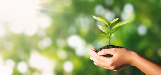 Wall Mural - plant growing in hand on green nature with sunlight background. eco environment concept