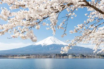 河口湖と桜