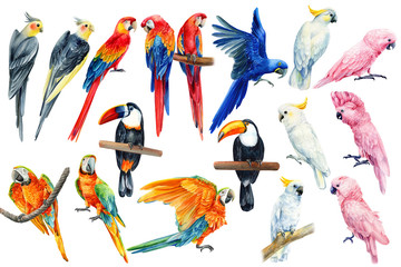 Watercolor parrots, tropical birds, toucan, macaw, corella, cockatoo, white isolated background, hand drawing