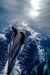 Fotorollo Delphin Dauphin
