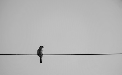 A little bird in a black and white picture