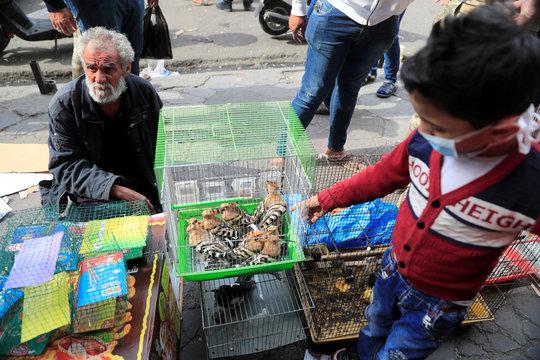 Iraqi man sells animals at the Ghazal pet market in Baghdad