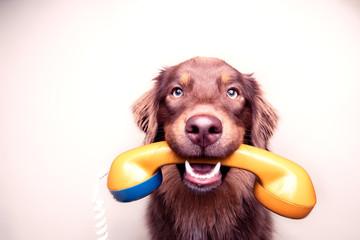 Hund mit analogem Telefon Fotobehang