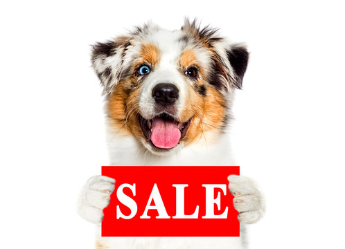dog vetdog holds a discount sign
