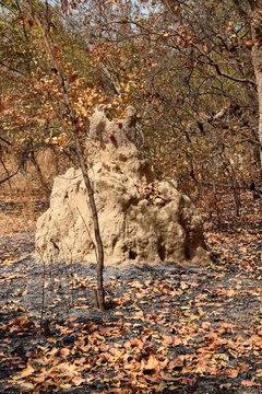 Termite mound (Senegal, Saloum Delta)