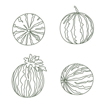 Watermelon Selection Vector Line Drawing on White Background