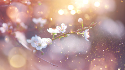 Fotoväggar - Spring Nature Easter art background with blossom. Beautiful nature scene with blooming flowers tree and sun flare. Sunny day. Spring flowers. Beautiful Orchard. Abstract blurred background. Springtime