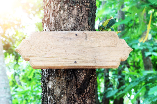 wooden sign blank on tree