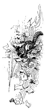 Squirrel in leaves in this picture, vintage engraving.
