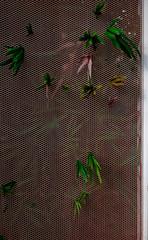 Door stickers London green scape prison