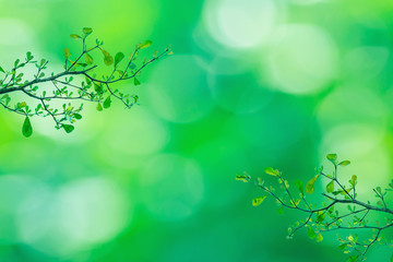 Twig with beautiful green leaves, blurred nature background Wall mural