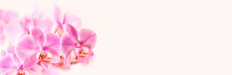 Tuinposter Orchidee Beautiful floral background. Pink phalaenopsis orchids on a light background. Pastel colors. Selective focus. Close-up.