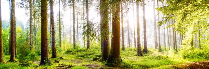 Foto op Aluminium Natuur Wundervoller Wald mit großen Bäumen und Sonnenstrahlen im Nebel