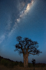 A vertical Milky Way night sky photograph, of the galactic centre rising above an ancient baobab tree, taken in the Pafuri Concession of the Kruger National Park, South Africa.