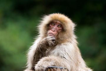 Tuinposter Aap 地獄谷野猿公苑のスノーモンキー 猿