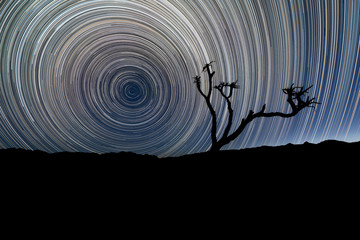 A beautiful night sky landscape with circular star trails, with a Quiver Tree silhouetted in the foreground and mountains on the horizon, in the Richtersveld National Park, South Africa. Fotobehang