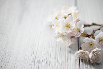 Fotorolgordijn Kersenbloesem 満開の桜