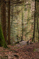 Tuinposter Bos rivier Stairway to the canyon and to the creek in the middle of the forest