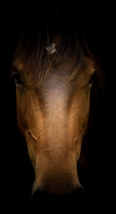 Foto op Canvas Paarden head of horse equine