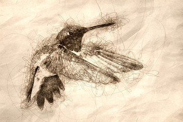 Wall Mural - Sketch of a Black-Chinned Hummingbird Searching for Nectar in the Green Garden