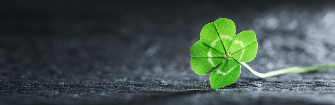 Bright green good luck four leaf clover.