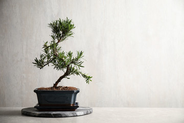 Deurstickers Zen Japanese bonsai plant on light stone table, space for text. Creating zen atmosphere at home