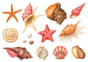 Set of seashells. Tropical underwater mollusk shells.