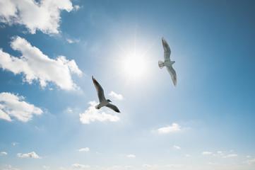 空を舞う2羽のカモメ Fototapete