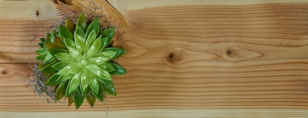 Overhead shot of a green plant placed on a cutting board Wall mural