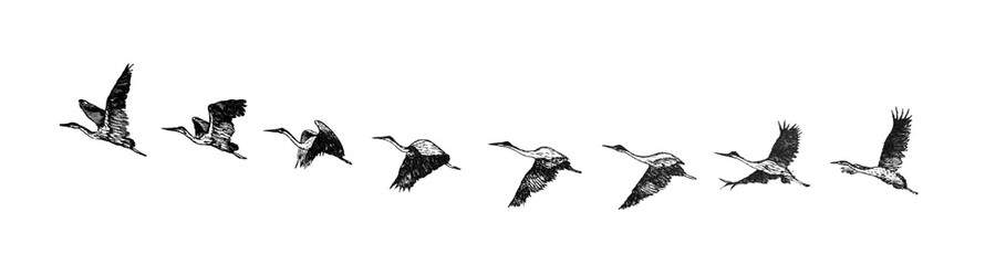 Stork flying / Antique illustration from Brockhaus Konversations-Lexikon 1908 Wall mural
