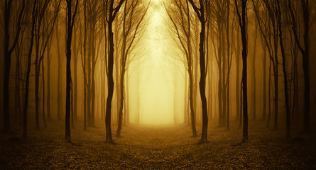 Wall Murals Forest forest with fog