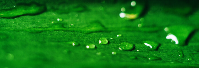 drops of dew on a green leaf close-up, macro Wall mural