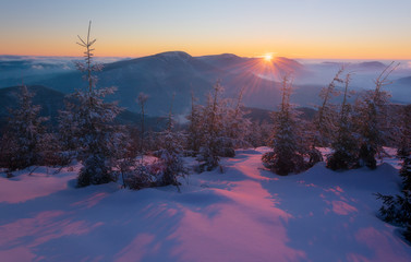 Poster Prune Sunset in the Winter mountains