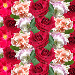 Wall Mural - Beautiful floral background of pelargonium and rose. Isolated