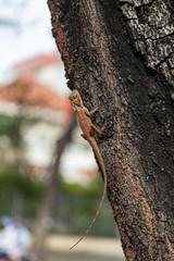 Fotorollo Chamaleon kameleon