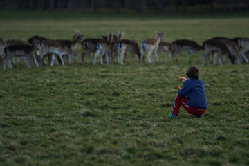 A child offers a carrot to a herd of deer in the Phoenix Park, as the number of coronavirus (COVID-19) cases grow around the world, in Dublin