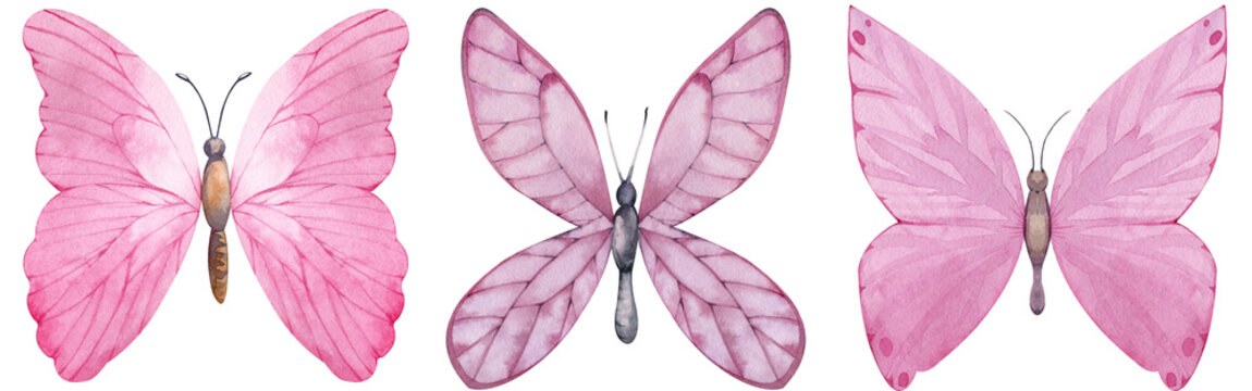 Set of pink butterflies. Watercolor hand-drawn illustration.