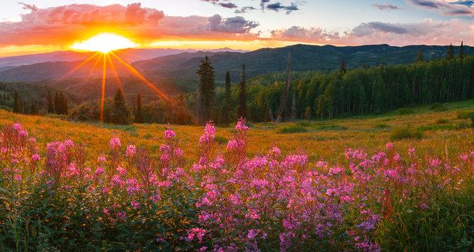 wildflower sunset panorama in the Colorado Rockies, USA.