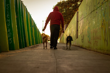 men walking with dogs and warms color