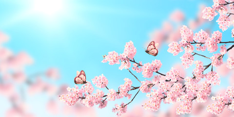 Wall Mural - Horizontal spring banner with sakura flowers and two butterflies