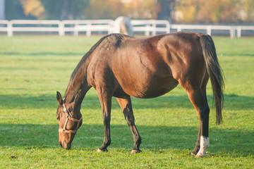 Konie na pastwisku - fototapety na wymiar