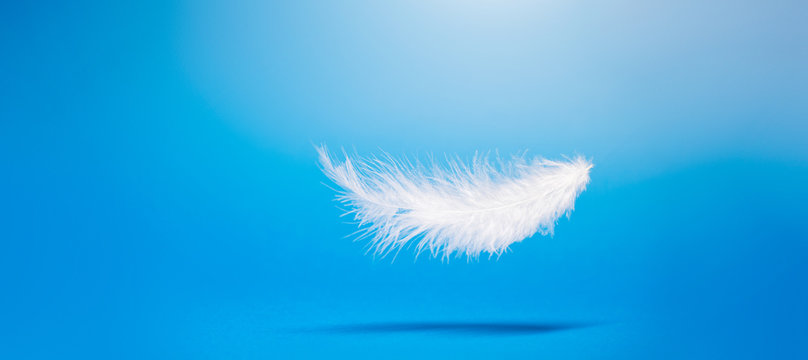 White feather on empty blue background